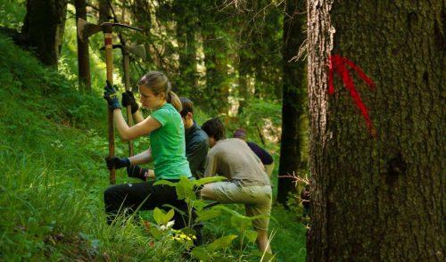 Artikelbild zu Artikel Aktion Schutzwald
