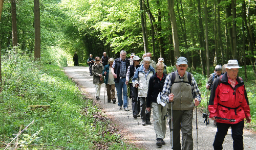 Artikelbild zu Artikel Wanderung im Märchenwald / Alvern am 27.7. WG II