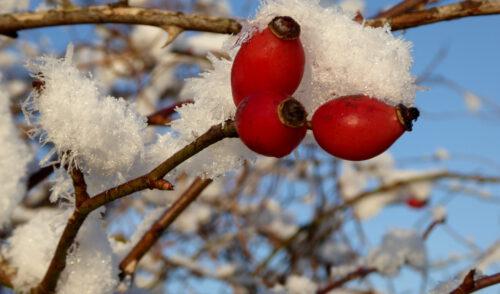 Artikelbild zu Artikel Winterwunderland